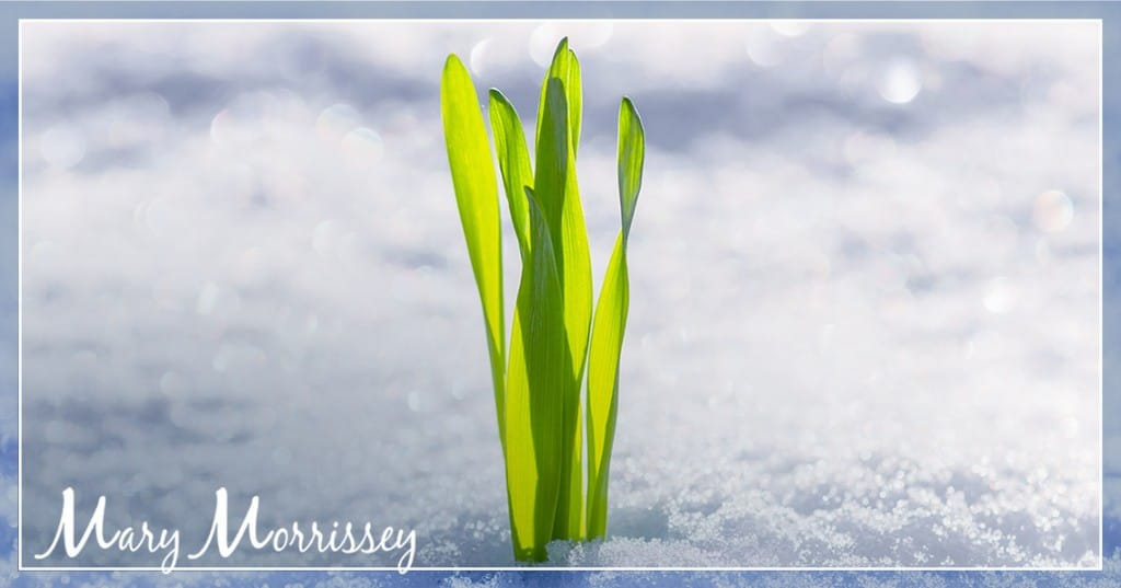 steps to achieve goals mary morrissey snow grass